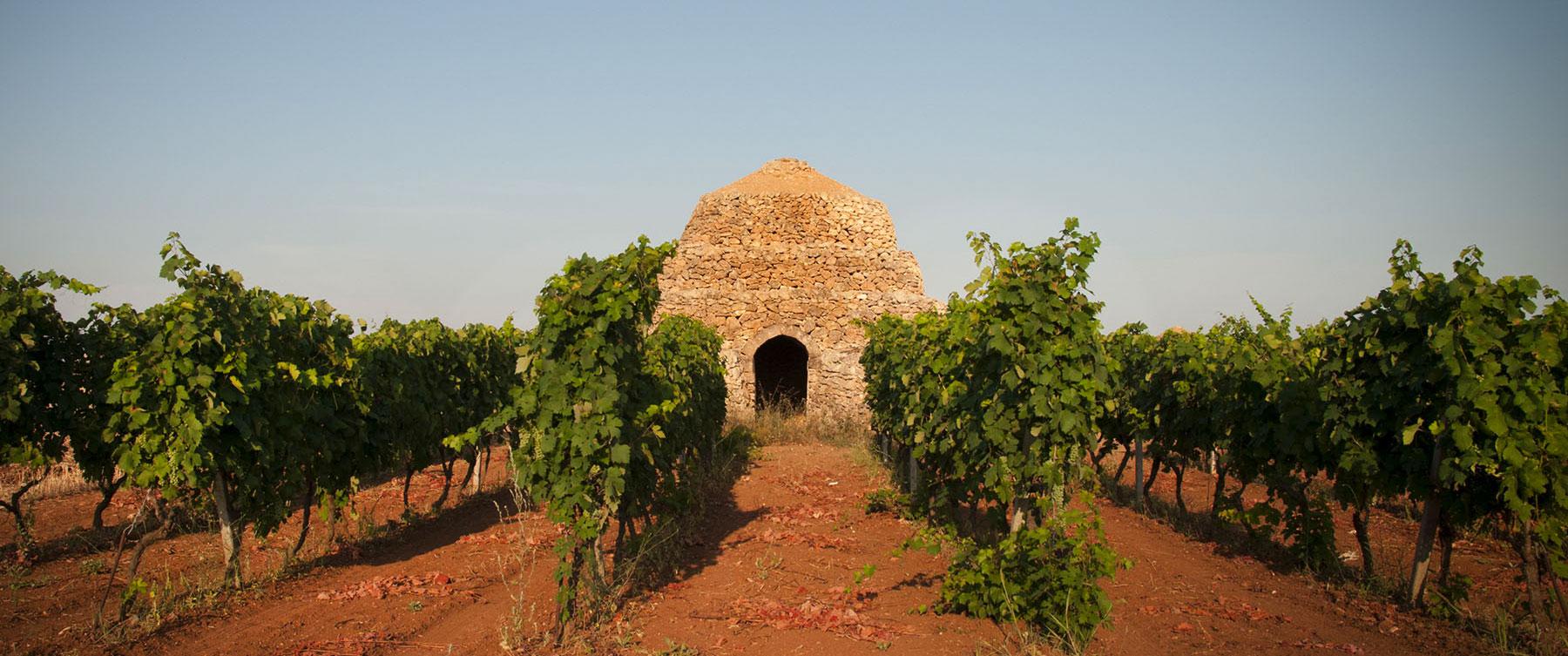 WineXperience: Susumaniello